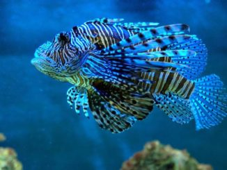 Tropsische Fische sind faszinierend